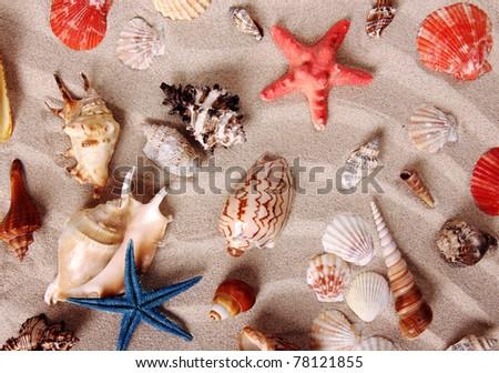 Sea shells on sand - stock photo