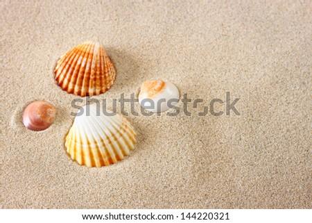 sea shells on sand at the beach - stock photo