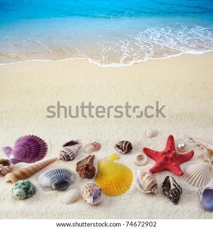 sea shells on sand beach - stock photo
