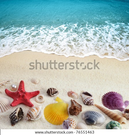 sea shells on sand beach - stock photo