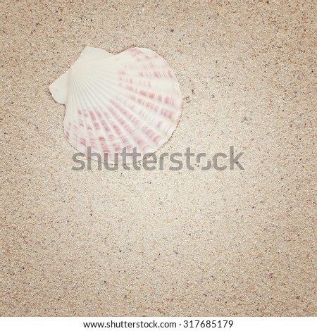 sea shells on sand, summer background, vintage color - stock photo