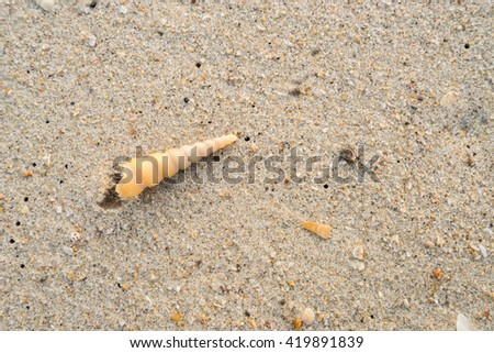 Sea shells on sand, Summer beach background, Top view, Selective focus - stock photo