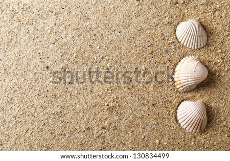 Sea shells on sand. Summer beach background with copy space. Top view - stock photo