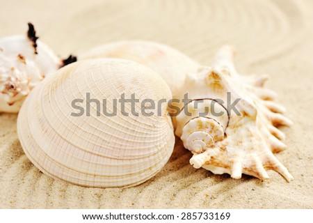 Sea shells on sandy beach - stock photo