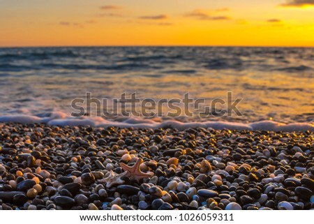 Sea shells on the beach at sunset time