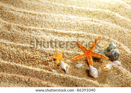 sea shells on the sand - stock photo