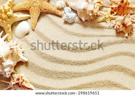 Sea shells on the sand background. Summer concept.