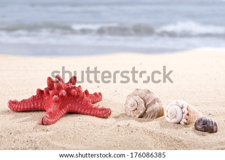 sea shells on the sandy beach and blue sea background - stock photo