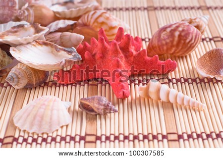 sea shells on wooden background - stock photo