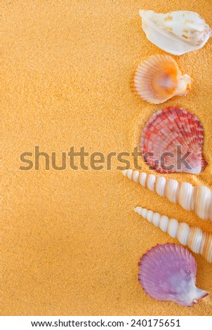 sea shells on yellow sand - stock photo