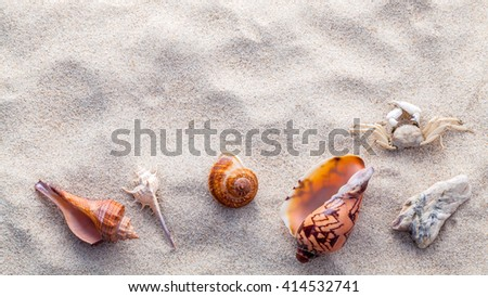Sea shells, starfish and crab on beach sand for summer and beach concept. Studio shot beach background.