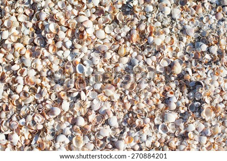 sea shells texture - stock photo