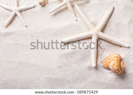 sea shells with sand as background and copyspace, summer concept