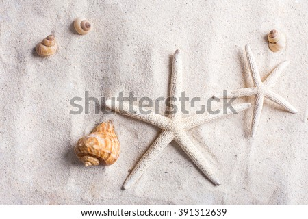 sea shells with sand as background and copyspace, summer concept - stock photo