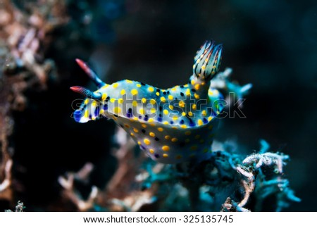 sea slug - stock photo