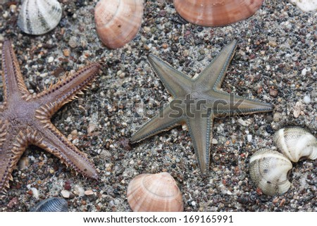 Sea star - stock photo