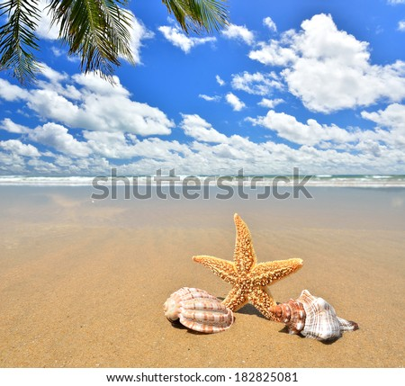 Sea star and conch shells on the sandy beach  - stock photo