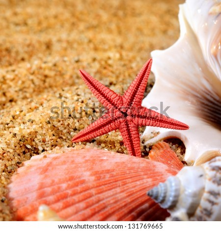 sea star and shells on the sandy beach - stock photo
