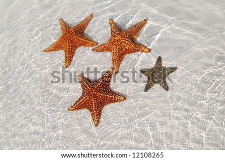 Sea star at the sand bottom of the fine sea