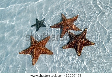 Sea star at the sand bottom of the fine sea, Carib sea, Cuba, Cayo-Largo