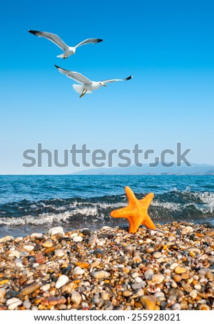 Sea star by the sea and seagulls, focus on the seagulls - stock photo