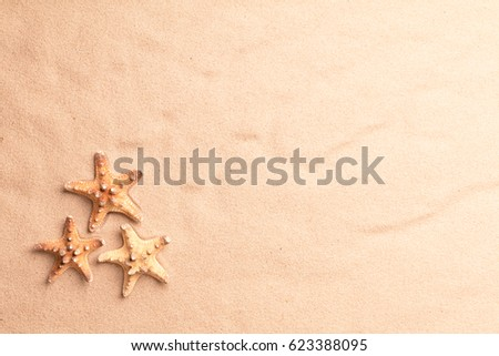 Sea star fish on beach sand texture. Summer vacation background with copy space.