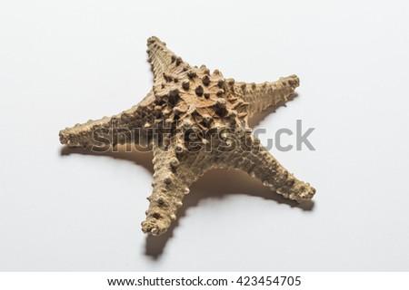 Sea star fossil - stock photo