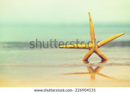 Sea star in water on sandy beach.Yellow starfish. Copy space - stock photo