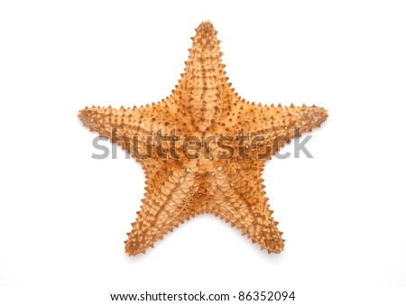 Sea star isolated on white - stock photo