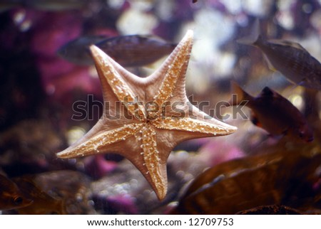 Sea star on aquarium wall stuck to the glass, starfish - stock photo