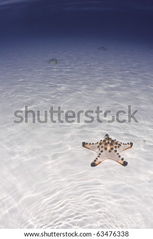 Sea star resting on a sandy sea bottom with blue backgrond - stock photo