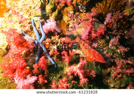Sea star soft coral and cod - stock photo
