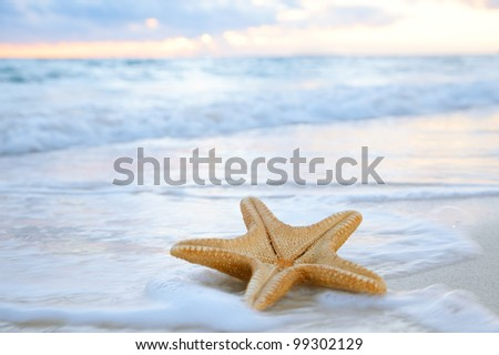 sea star starfish on beach, blue sea and sunrise time, shallow dof - stock photo