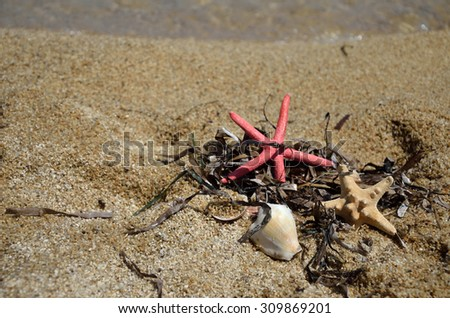 Sea stars, grass and shells set on a beach