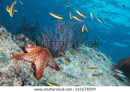 sea stars in a reef colorful underwater landscape background - stock photo