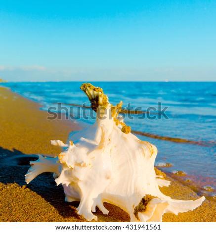 Sea Summer Beach  - stock photo
