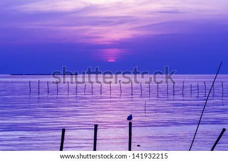 Sea sunset with stumps and seagull foreground - stock photo