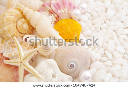 stock-photo-sea-theme-with-seashells-and
