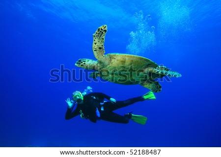 Sea Turtle and Scuba Diver - stock photo