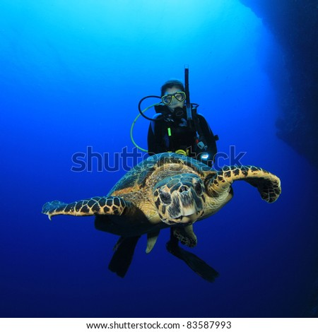 Sea Turtle and young woman scuba diver - stock photo