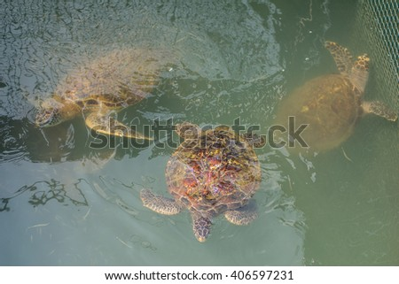 Sea turtle  Conservation of marine species - stock photo