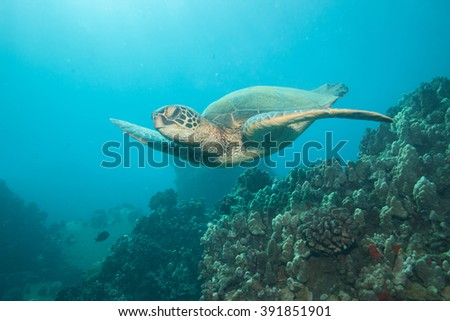 Sea turtle glides through the underwater reefscape