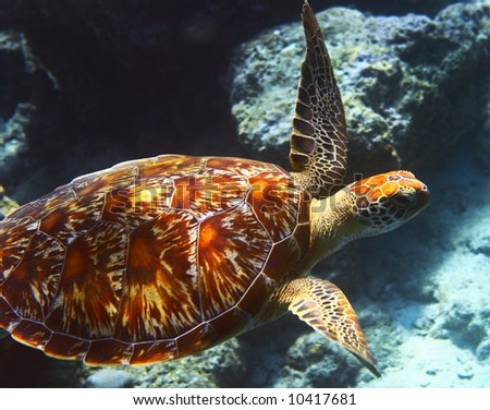 sea turtle is on an ocean bed - stock photo