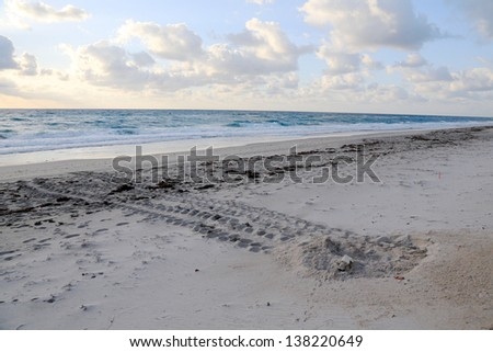 Sea turtle nest on the beach with tracks to the ocean, coming and going - stock photo