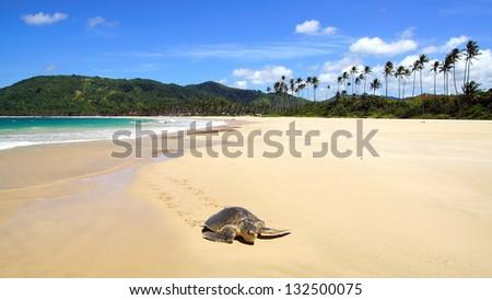 Sea turtle on beach. El Nido, Philippines - stock photo