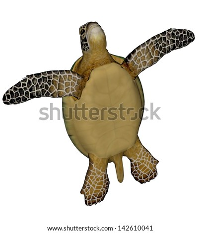 Sea turtle standing quietly in white background - stock photo