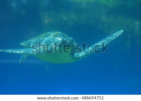 Sea turtle swimming along under the water's surface.