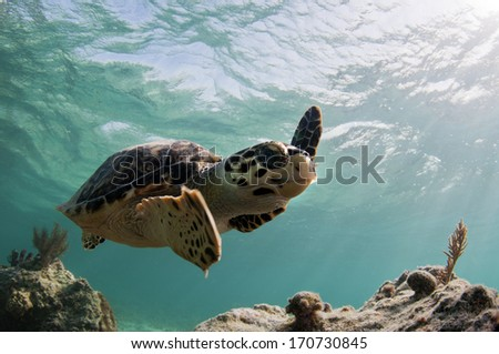 Sea Turtle Up Close - stock photo