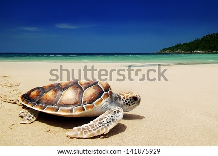 Sea turtles on the beach - stock photo