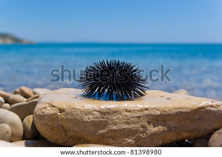 sea urchin on rock with sea background - stock photo